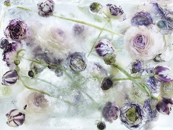 "By freezing beautiful and colorful flowers into large blocks of ice, Japanese artist Kenji Shibata has created a subject for his photos that is both strikingly beautiful and poignantly symbolic. His ""Locked in the Ether"" photo series features flowers literally frozen in time, cut down and preserved in ice to both save and destroy their beauty."