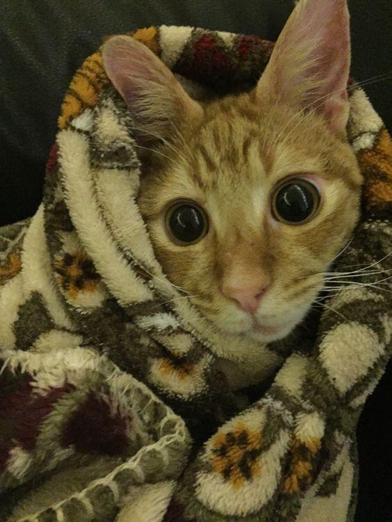Blind in a blanket
