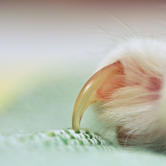 Catscratchfever