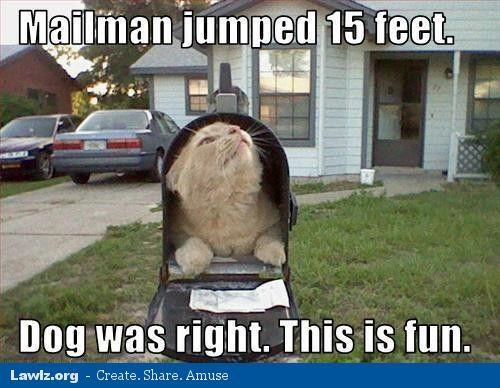 Fun Wife Meme : Cat mailbox meme mailman jumped feet dog was right this