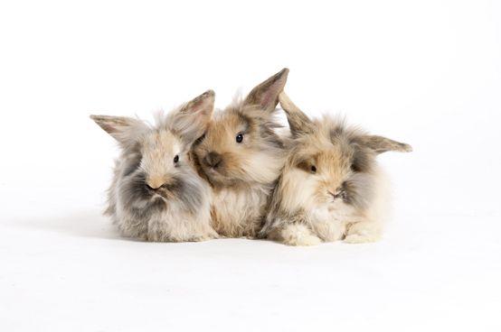 Best friends  www.karlie-flamingo.com #bunnies #hasen #kaninchen #friends #cute #tiere CC BY-NC-ND 3.0
