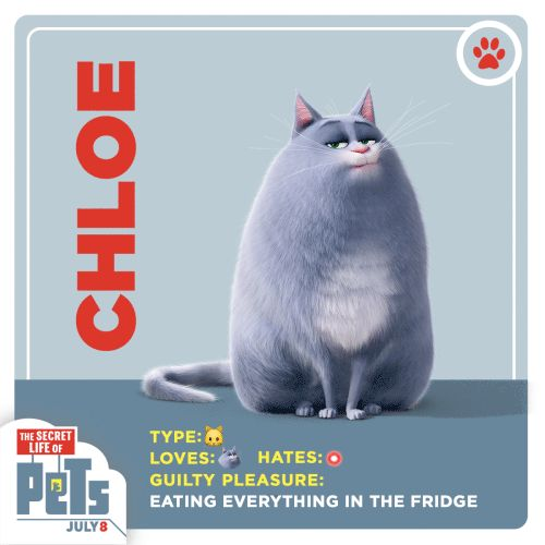 Meet Chloe. She can't be bothered… unless you have food