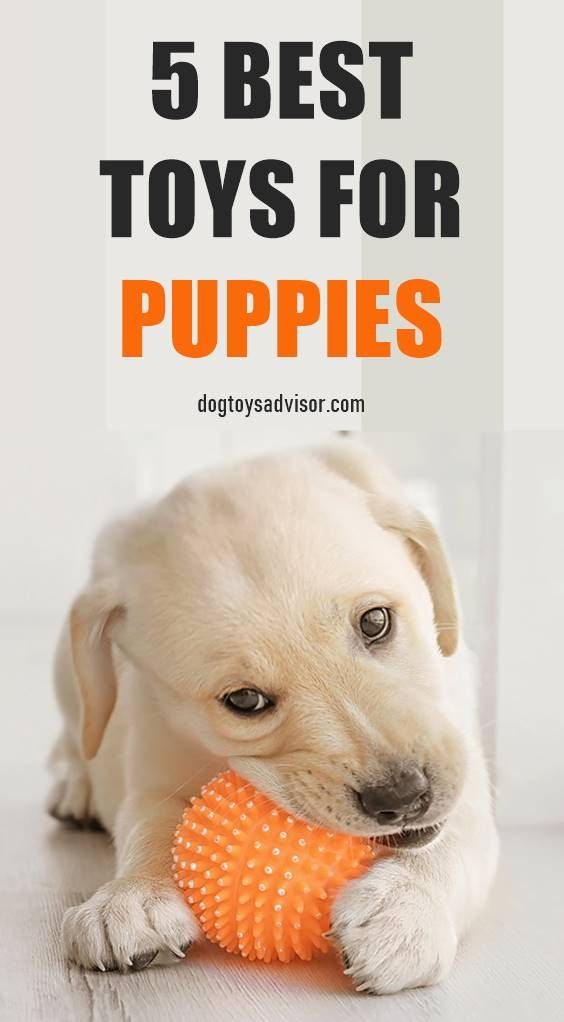 5 Best Puppy Toys Best Toys For Puppies Dog Teething Toys Toy Puppies
