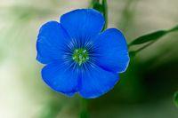 Utah Wildflowers- blinds between may and July