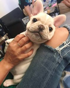 Pin By Victoria Franklin On Puppy Love In 2020 French Bulldog