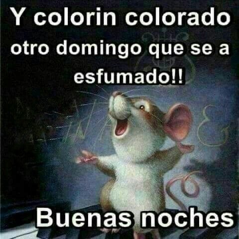 Buenas Noches Ecards Funny Funny Memes Memes