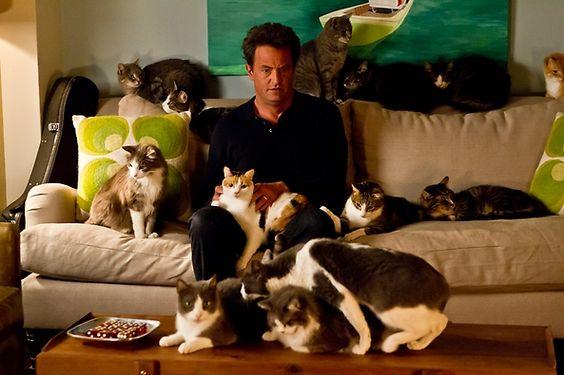 So many cats.