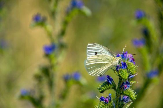 butterfly-831612_1280.jpg (1280×853)