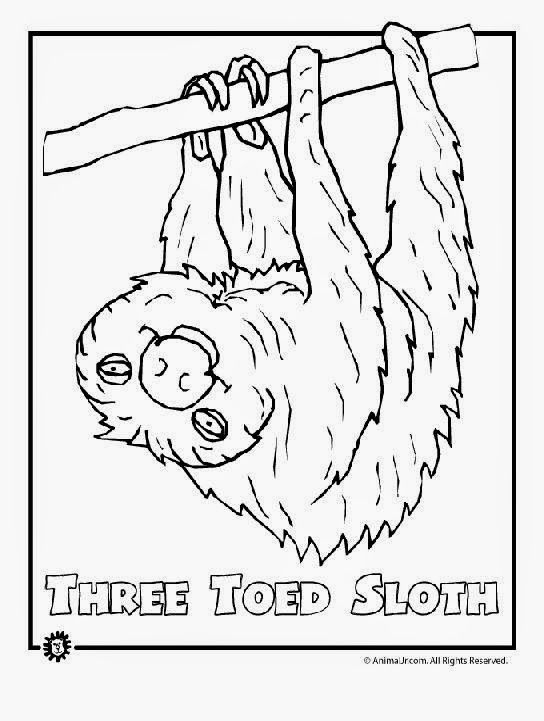 Rainforest Animals Coloring Pages Free Rainforest Animals