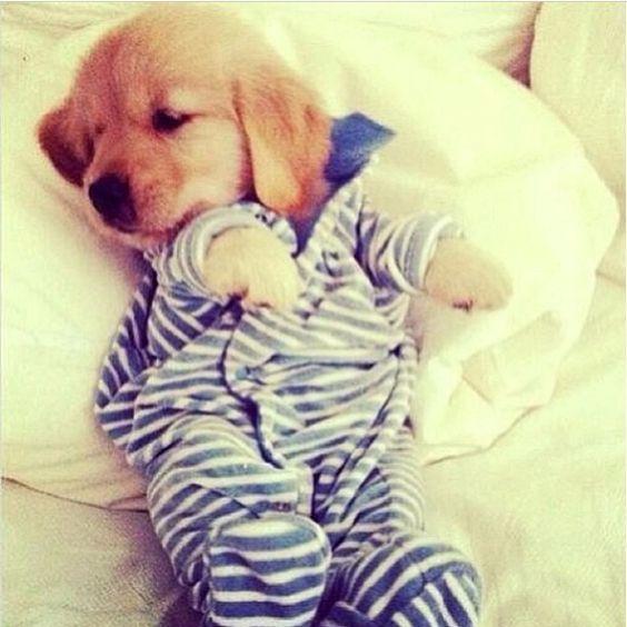 Sleepy puppy ❤️
