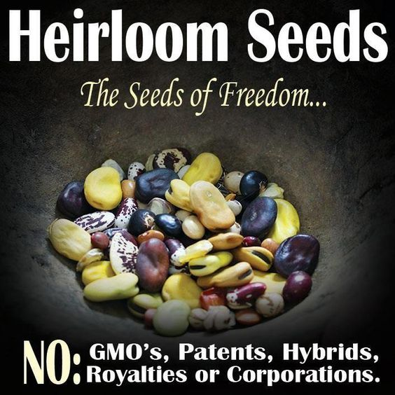 Freedom from food tyranny begins with understanding of what heirloom seeds really mean for the future of food...read on
