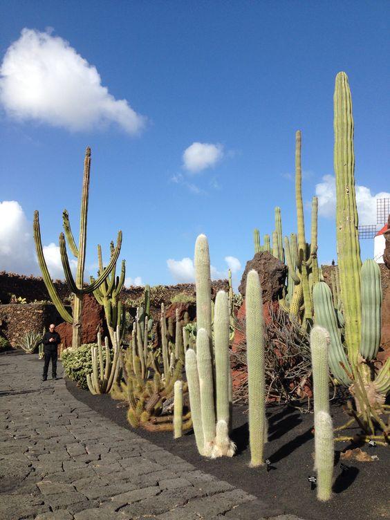 Jardim de cactos Lanzarote