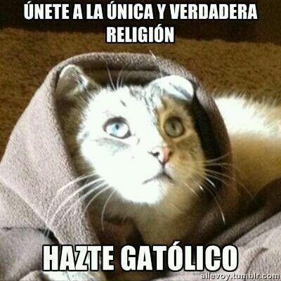 Gatolico