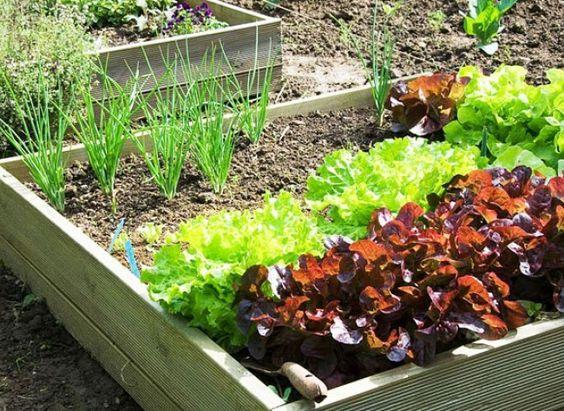 Un mini potager miniature et articles for Savoir jardiner