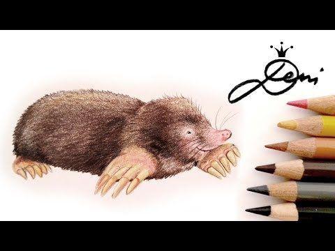Maulwurf Zeichnen Lernen Mit Buntstiften How To Draw A Realistic Mole Kak Se Risuva Krtiche Youtube Realistic Drawings Drawings Anime Drawings