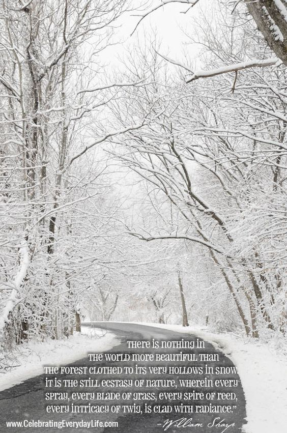 Beautiful Snow Inspiring Quote Celebrating Everyday Life With Jennifer Carroll Snow Quotes Winter Quotes Snow