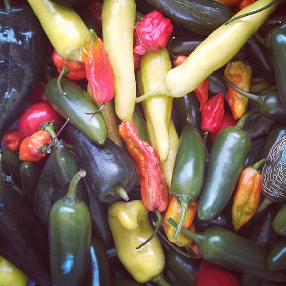 #farmersmarketnyc - Forest Hills Greenmarket via qnsgreenmarkets on Instagram