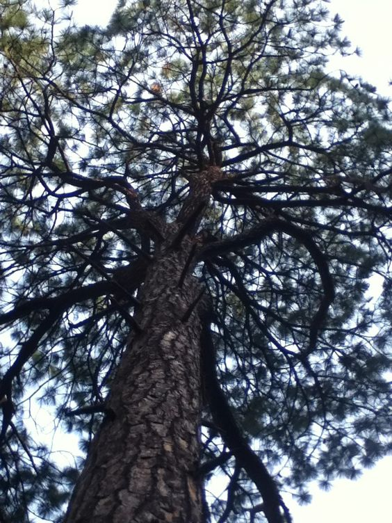 Gran árbol.