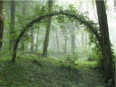 The Arc of Nature's Triumph
