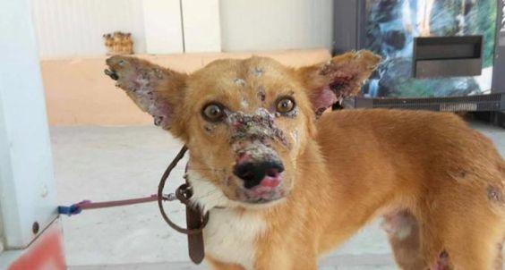 Encuentran en Málaga a un perro que ha sido utilizado como diana
