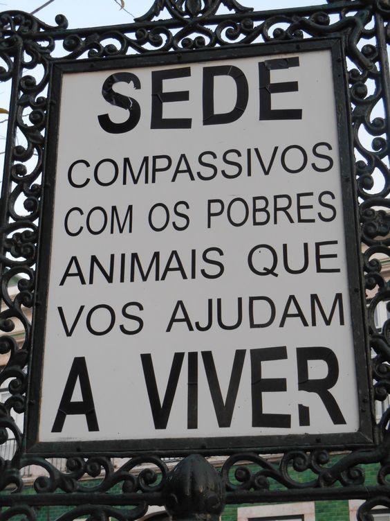 Animal rescue Lisboa