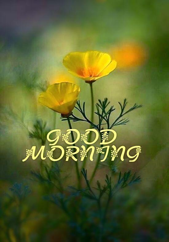 60 Schönste Guten Morgen Bilder Mit Blumen Hindi Status