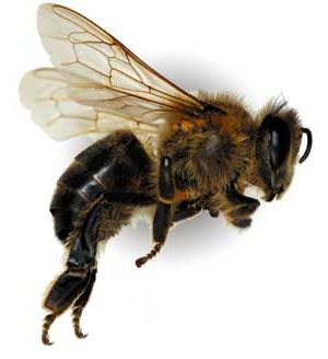 bee - Google Search: