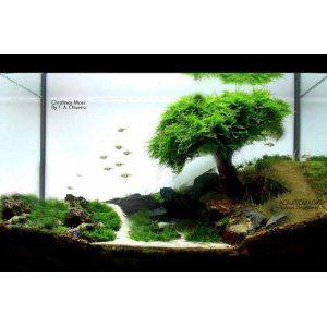 ... love love the fish tanks aquarium tanks plants live aquarium fish