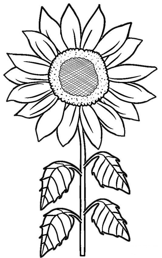 How To Draw A Sunflower Easy Step By Step Drawing Guides Sunflower Coloring Pages Flower Coloring Pages Sunflower Stencil