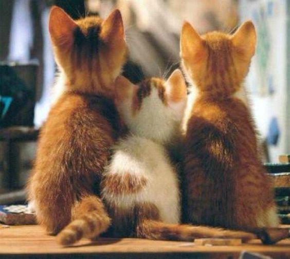 子猫3匹の後ろ姿☆
