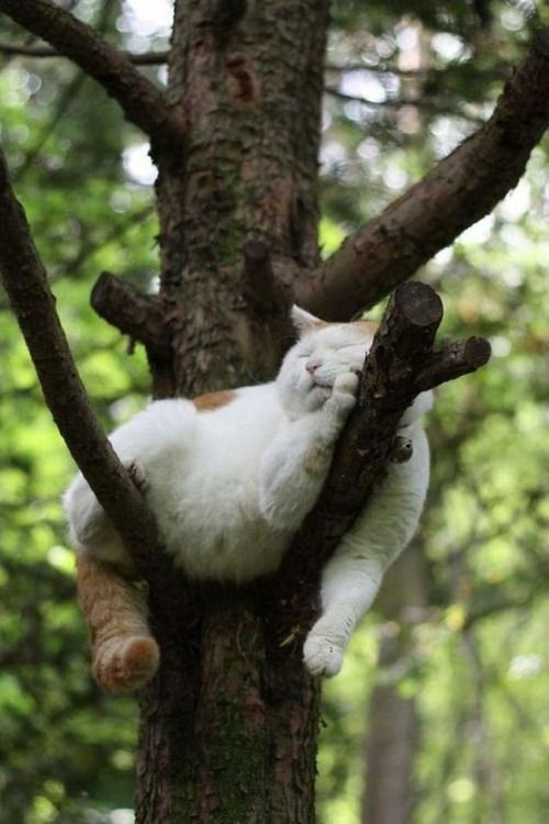 cat sleeping on the tree