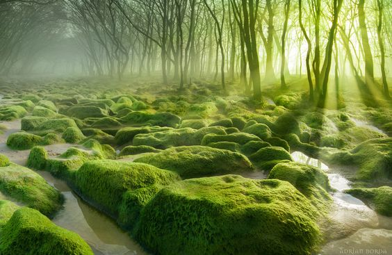 Moss Swamp II by Adrian Borda on 500px