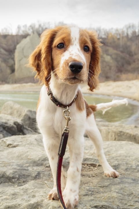 40 Medium Sized Dog Breeds That Are The Perfect First Pet For Any Family Dog Breeds List Best Medium Sized Dogs Dog Breeds Medium