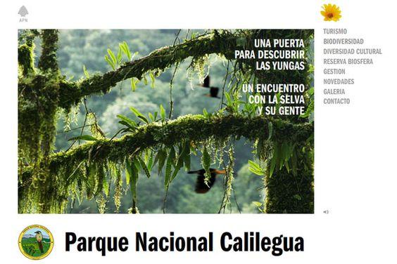 Parque Nacional Calilegua: Entre las nubes