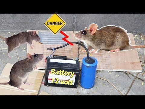 Rat Trap With Electric Battery 12volt Do You Know How It Works