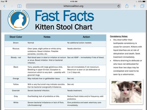 Pin By Annie Williams On Pets Stool Chart