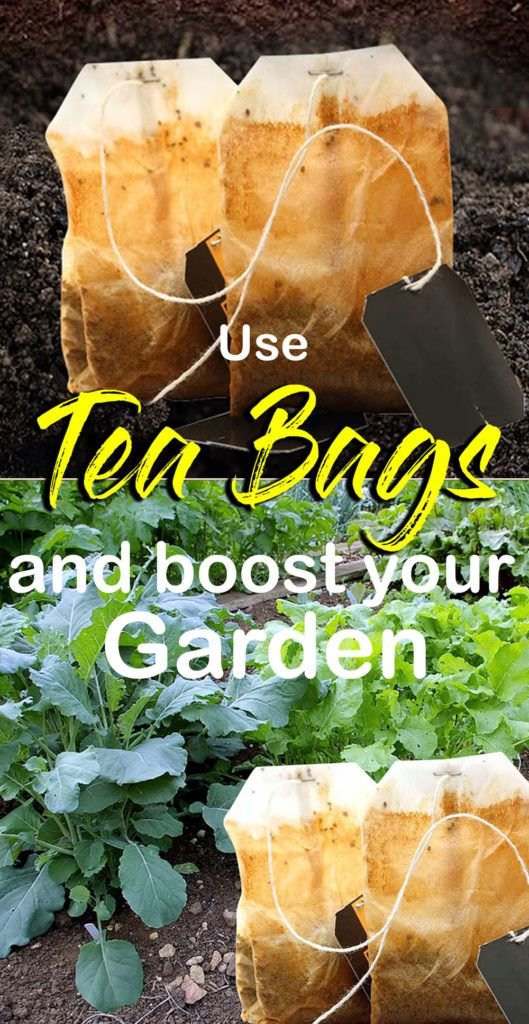 How To Use Tea Bags In The Garden In 2020 Used Tea Bags Compost Tea Bags Compost Tea