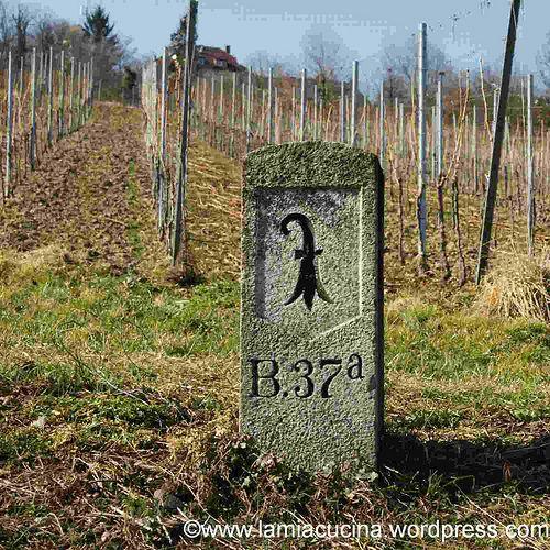 Vineyard near Basel