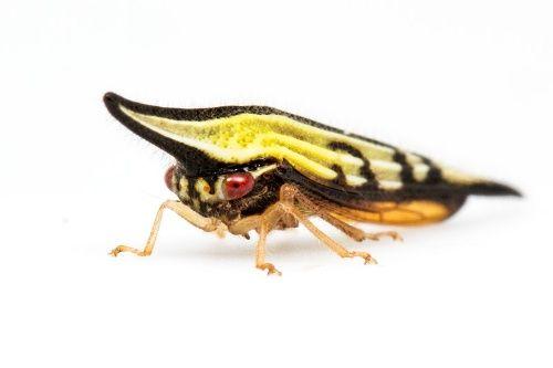 ボード Entomology のピン