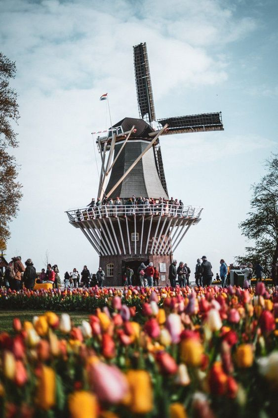 An in-depth guide to the Keukenhof Gardens in Holland, with beautiful Keukenhof photography, tips for finding colourful tulip fields and insider info on how to visit this amazing Dutch garden in Lisse, where you can see tulips near Amsterdam in the Netherlands! #netherlands #keukenhof #travel