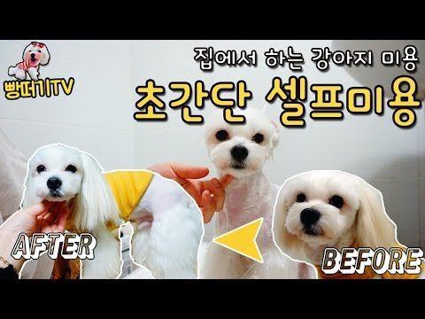 집에서 초간단 셀프미용 샵안가고 말티즈 미용 예쁘게 하기 Dog Grooming Services Youtube 말티즈 강아지 미용