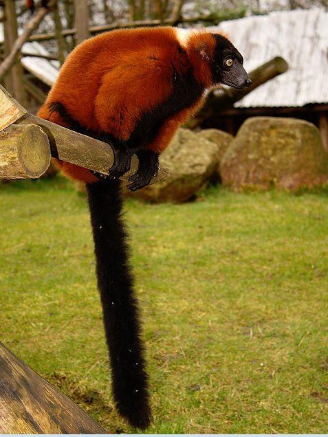 48+ Lemure 35 info