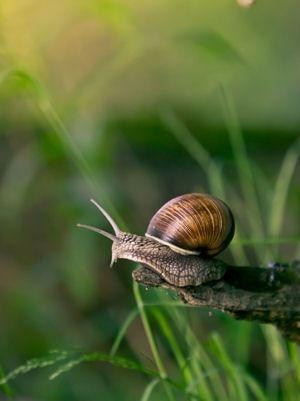 Eliminer les limaces et les escargots
