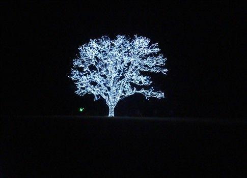 Beautiful tree in Flower Mound, Texas