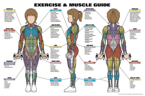 Women S Exercise And Muscle Guide Professional Fitness
