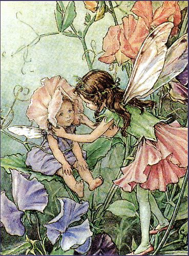 Sweet pea fairies.  Cicely Marie Barker: