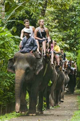 Elephant safari ride somewhere in the Southeast Asia!! : PENDING!