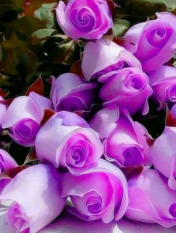 Justin Vo Love Flowers Roses Purple Flowers Beautiful Roses Love Flowers