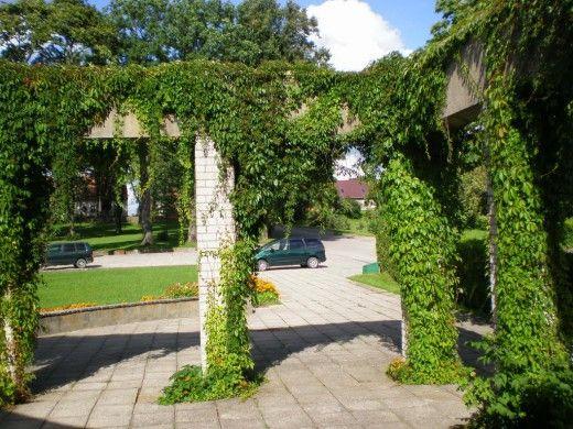 Вертикальное озеленение применяют для декоративного эффекта на участке и защиты зданий, площадок отдыха, детских площадок от шума, ветра, пыли и перегрева.  Вертикальное озеленение удобное тем, что способно в сравнительно короткий срок создавать плотное живописное зеленое покрытие вертикальных стен (беседок, подпорных стенок и других сооружений). Для вертикального озеленения используются вьющиеся многолетние растения с разнообразными формами цветов и плодов, фактуры и окраски листьев. Многие…