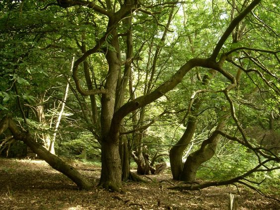 These woodlands are known for being eerie. Their histories have been embellished over the years, but what's better than a good ghost story?